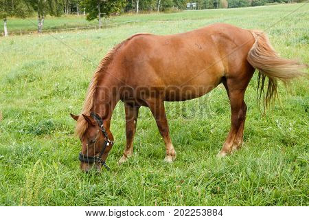 One horse eating grass in the pastures