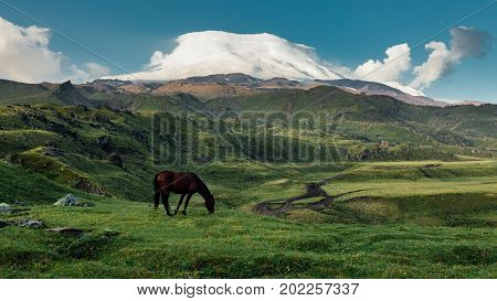 Brown Horse Grazing In Mountain Meadow Valley On Background Of Mount Elbrus