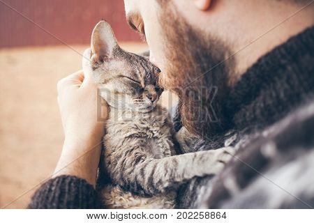 Muzzle of a cat and a man's face. Close-up of handsome young man and tabby cat - two profiles. The Devon Rex cat with the owner. Cat gently pressed. Love cats and humans. Relationship weasel.