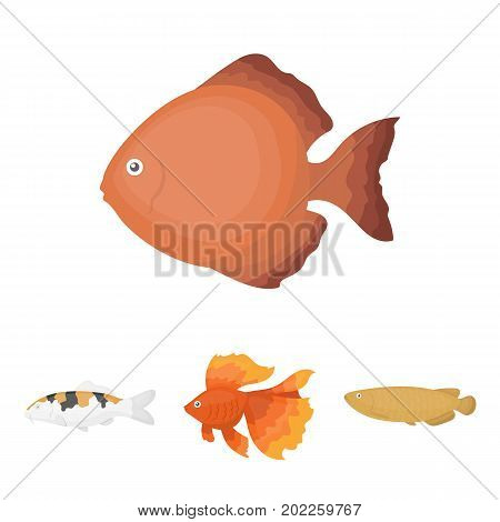 Discus, gold, carp, koi, scleropages, fotmosus.Fish set collection icons in cartoon style vector symbol stock illustration .