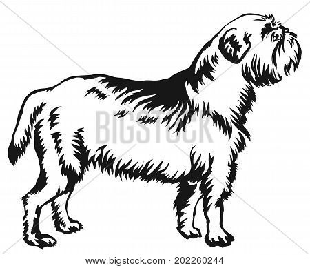 Decorative portrait of standing in profile Griffon Belge vector isolated illustration in black color on white background