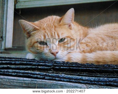Close up of a cat laying down