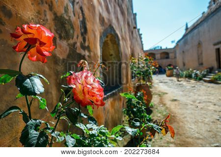 Beautiful Roses In The Pot,  Arkadi Monastery On Crete Island, Greece