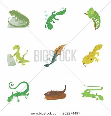 Types of reptile icons set. Cartoon set of 9 types of reptile vector icons for web isolated on white background
