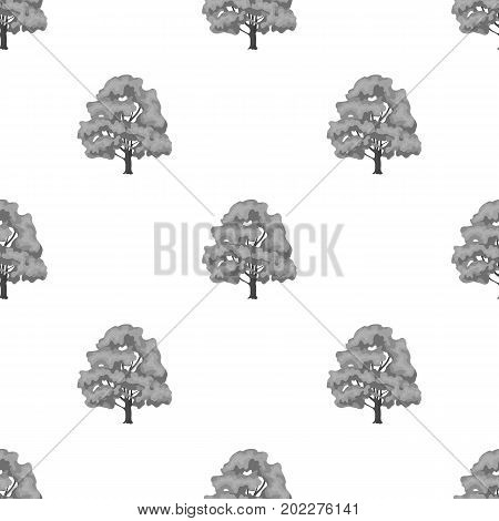 Canadian maple. Canada single icon in monochrome style vector symbol stock illustration .