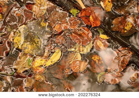 Fall foliage submerged in water with woodland debris.