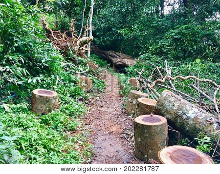 Timber wood in forest, Wood was cut from the deforester