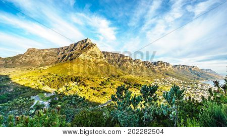 View of Table Mountain and the Twelve Apostles and the beach community of Camps Bay from the hiking trail to the top of Lions Head mountain near Cape Town South Africa on a nice winter day