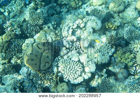 Corals on the seabed, water, ocean, reef