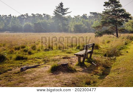 Empty wooden bench at the edge of a picturesque moorland with flowering heather. It is early in the morning of a sunny day at the end of the Dutch summer season.