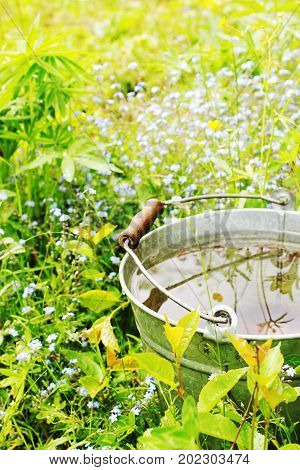 The bucket with rainwater in the grass