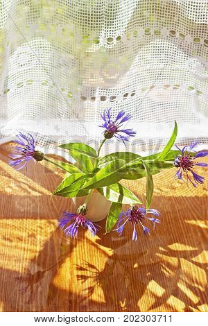 Several of blue cornflower in a white cup on the reflective surface against a background of the window curtain