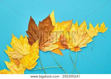 Autumn Fashion Fall Leaves Background. Vintage. Design. Yellow Fall Leaves. Trendy fashion Stylish Concept. Autumn Vintage