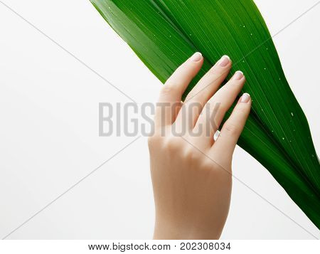 Beauty Care. Delicate Hands With Manicure Holding A Leaf Close Up Isolated On White Background. Beau