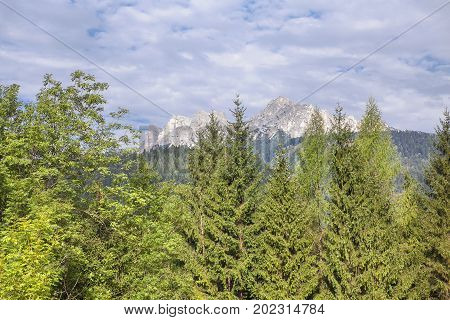 beautiful natural landscape with fir tress and mountains