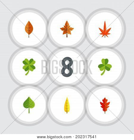 Flat Icon Leaves Set Of Maple, Aspen, Hickory And Other Vector Objects
