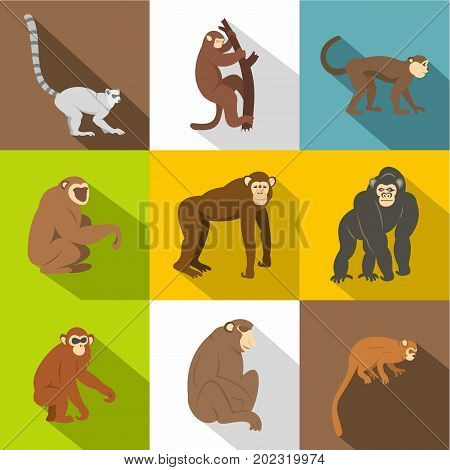 Monkey types icon set. Flat style set of 9 monkey types vector icons for web design