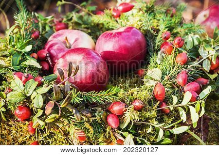 berries, rosehips, apples and a wreath of fir branches in the autumn forest. gifts of autumn forest