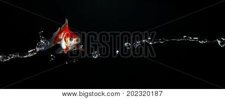 Flying Goldfish Toss