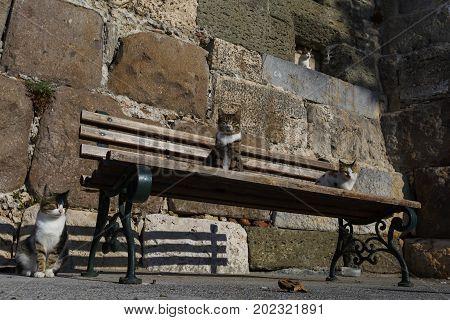 Cats on a bench near Neratzia castle in Kos town, Greece.