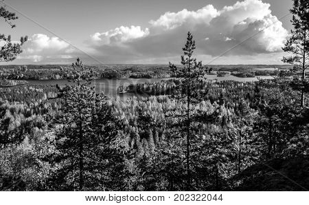 Forest background view in Finland during autumn black and white