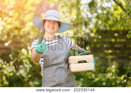 Photo of agronomist girl in hat with box of cucumbers on shoulder in garden