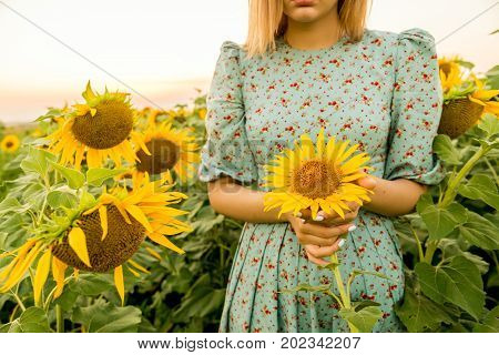 Close up young woman holding bright yellow sunflower in field