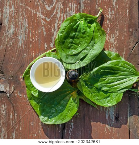 Herbs tea and tincture from leaves of plantain on wooden table. Herbal Medicine. Top view