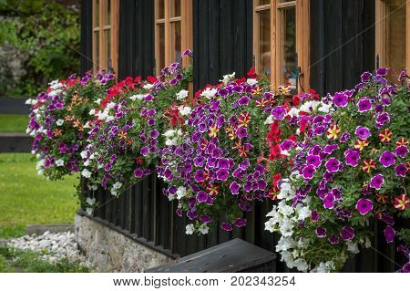 Flowers Below The Windows Of A Woodhouse