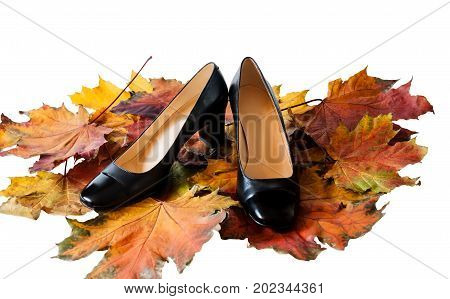 Women's shoes on colorful autumn leaves isolated on white background. Autumn shoes sales concept