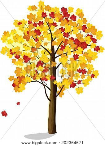 autumn maple tree with falling leaves vector