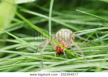 fauna, spiders, predator, spider, squad arthropods, arachnids, Araneae, summer, hunting