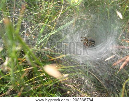 Spider's lair on the background of green grass