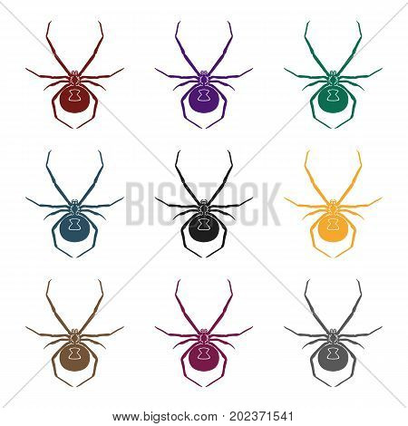 Black widow spider icon in black design isolated on white background. Insects symbol stock vector illustration.