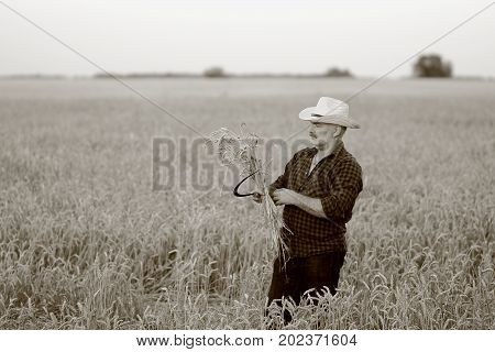 agronomist in a straw hat with a sickle in a wheat field