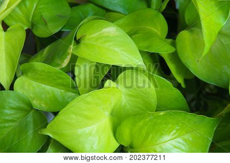 close up green leaf for texture and background