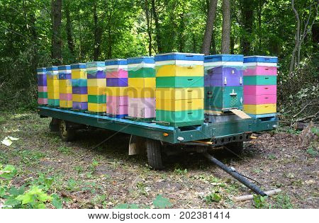 Beehive Transport. Relocating Bees in Forest for Honey Bee Raw Linden Honey. Colorful Painted Beehive.