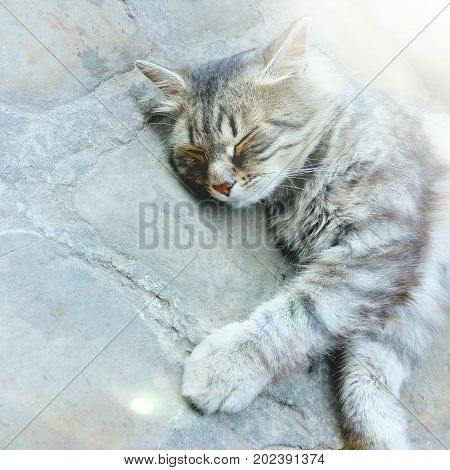 A Cute Kitty Resting On The Pavement