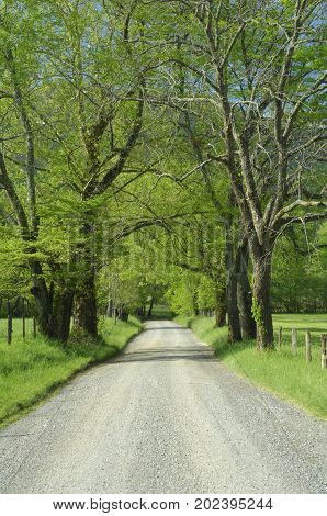 A scenic view of Sparks lane in Cades Cove of Great Smoky Mountains National Park Tennessee USA in early Spring.