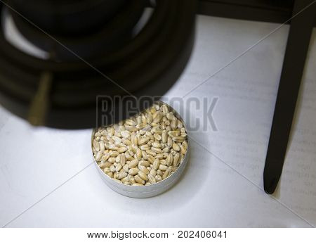 Genetically modified agricultural seeds of plants in the bucket, close up view