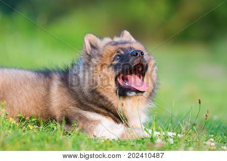 Portrait Of A Cute Elo Puppy
