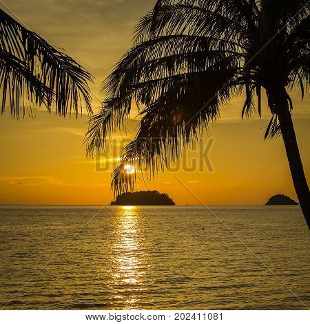 Coconut palm trees silhouette and sea water on sunset in tropical beach Thailand