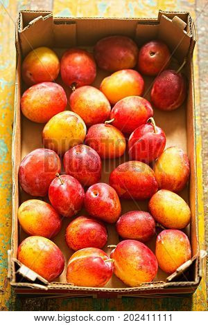 British Victoria Plums. Sweet and juicy plums in box