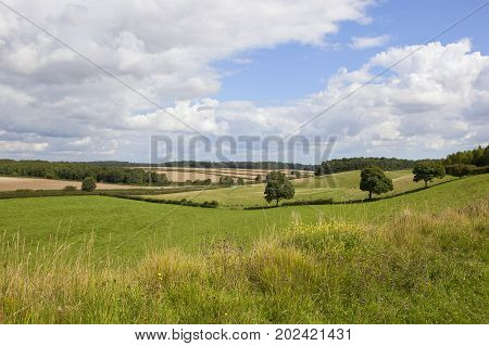 English Landscape And Wildflowers