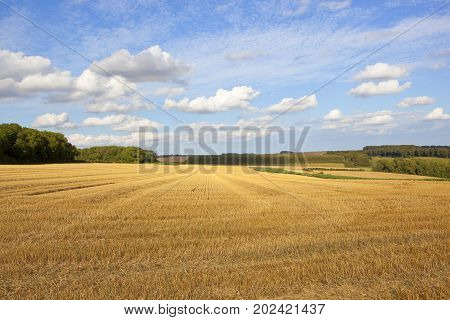 Yorkshire Wolds Harvest Time