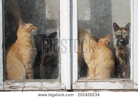 family of kitties different colors, kinds and ages sit on window warms under sun