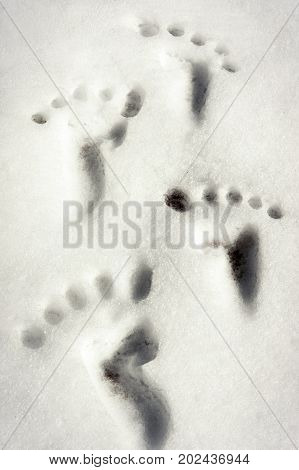 Small traces/footprint imitation on white winter snow surface. Outdoors Closeup vertical image.