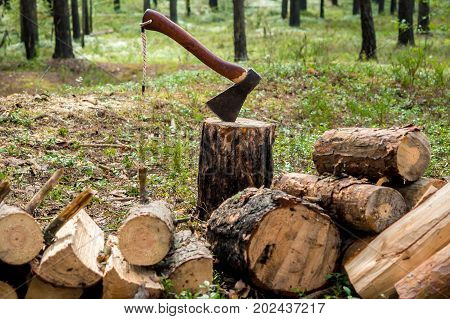 The lumberjack chopped the tree trunks for firewood with an axe. The texture of cut wood. Hiking fuel fuel for camping. Natural chopped wood.