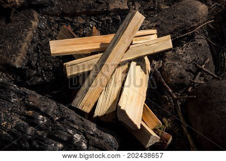 Chopped tree for firewood. The texture of cut wood. Hiking fuel for camping. Natural chopped wood.