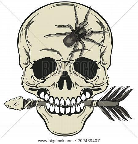 Vector of human skull with arrow in a mouth and big spider on forehead